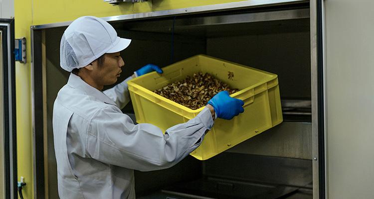 栄養を損なわないように自動的に温度調節される、アガリクス専用乾燥機にかけられます